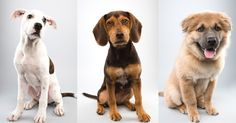 This year's Puppy Bowl picks are going overtime with cuteness. ALL PETS SHOWCASED ARE AVAILABLE FOR ADOPTION