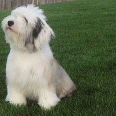 Paul Anka Gilmore Dog Breed