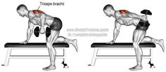 """Dumbbell kickback. An isolation exercise. Target muscle: Triceps Brachii. Synergists: None. Visit site and read the """"Comments and tips"""" to learn why this exercise is one of the most effective for your triceps."""