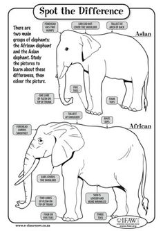 Spot the Difference printable on African and Asian elephants