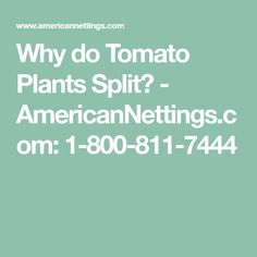 Why do Tomato Plants Split? - AmericanNettings.com: 1-800-811-7444