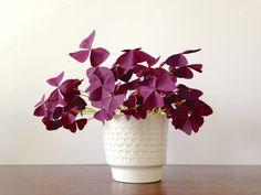 Vintage Blumentöpfe - ☘ Vintage Blumentopf Übertopf Relief 50er - ein…