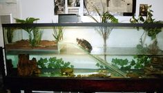 New Pet Turtle Aquarium Ideas Aquatic Turtle Habitat, Aquatic Turtle Tank, Turtle Aquarium, Aquatic Turtles, Water Turtles, Aquarium Ideas, Turtle Cage, Turtle Pond, Pet Turtle