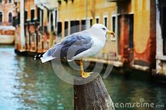 Colorful isolated seagull on a wooden pole, outdoors, in Venice, Italy, Europe.