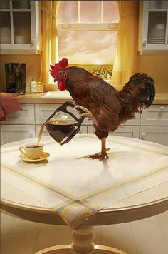 Right. You know the rooster NEEDS that  coffee to make it up in time to wake ME up. I indulge him because I know hard HARD 'tis to wake up of a morning.'
