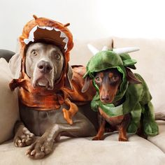 Harlow and Indy celebrating Halloween