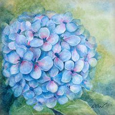 Hydrangea 1 - Watercolor - Painted by Xixi Wang (2014)