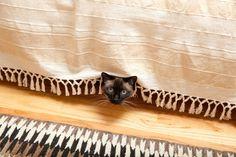 #SerenaMiller 's cat