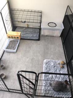 Diy Bunny Cage, Diy Bunny Toys, Diy Guinea Pig Cage, Bunny Cages, Rabbit Cages, Pet Bunny Rabbits, Pet Rabbit, Baby Bunnies, Indoor Rabbit House