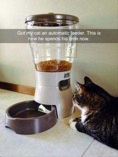 ;! ♦' Got my cat an automatic feeder. This is how he spends his time now.