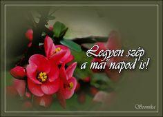 Szép napot képeslapok Good Morning, Plants, Humor, Buen Dia, Bonjour, Humour, Funny Photos, Plant, Funny Humor