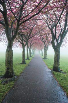 ✯ Early morning mist in the Meadows, Edinburgh, Scotland