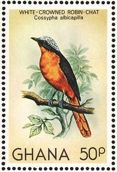 White-crowned Robin-Chat stamps - mainly images - gallery format