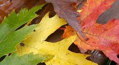 Nesta quinta-feira (20) começa o outono, estação do ano que antecede o inverno. Saímos do clima quen...