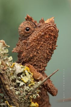 "Iguana by Igor Siwanowicz -- stolen from the wonderful board ""What The?"" (Hey, great minds think alike!)"