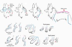 Bilderesultat for wolf fur drawing