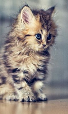 Adorable and fluffy #kitten