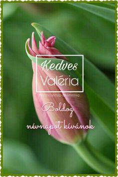 Happy Birthday, Rose, Flowers, Happy Brithday, Pink, Urari La Multi Ani, Happy Birthday Funny, Roses, Royal Icing Flowers