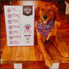 @TheGoldenfinn wants to win $1 million. Do you?! On February 15th and 16th, elite dogs across seven different groups, will compete for top honors at the 2016 Westminster Kennel Club Dog Show sponsored by @ProPlan. Click on the link in our bio to fill out your bracket for a chance to win $1 million!* Just like the show, choose a winning breed from each of the seven groups, then choose your overall champion for the title of Best in Show. After your bracket is complete, cross your paws and tune…