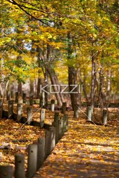 wooden post and autumn leaves. - Wooden post and autumn leaves in forest.