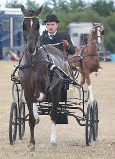 Hackney Horse | Hackney Horse and Pony Classes | Flickr - Photo Sharing!