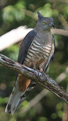Kingfisher Park Birdwatchers Lodge | Accommodation | Queensland Birds & Wildlife