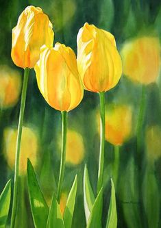 Watercolor Tulips Wall Art - Painting - Yellow Tulips by Sharon Freeman Art Floral, Floral Prints, Watercolor Flowers, Watercolor Paintings, Watercolors, Watercolor Paper, Drawing Flowers, Art Paintings, Tulip Painting