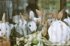 Truwelu PASTY  Contax 137MD Quartz | Carl Zeiss Planar 50mm f/1.7 T* | Fujifilm Superia 200 (2008) F1, Quartz, Animals, Animales, Animaux, Animal, Animais, Quartz Crystal