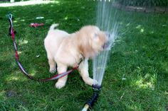 #puppy training? Get tips here!