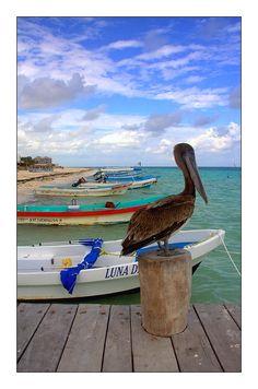 Yvan le pélican - Puerto Morelos, Quintana Roo   Mexico