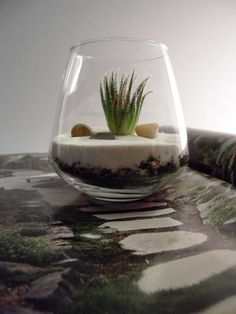 adorable terrarium