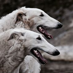 The hounds | The North Realm