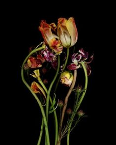 Bouquet, 2004 Archival Pigment Edition of 10 Amazon Art, Flower Art, Find Art, Glass Vase, Flora, Bouquet, Artwork, Inspiration, Image