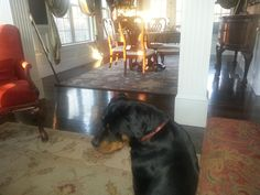 """""""Even with 2 rottweilers, our floors remain shiny, beautiful and so easy to maintain all thanks to Quick Shine! I can't say enough good things about your products!"""""""