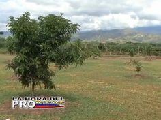 MILAGRO VERDE, AGRICULTURA ECOLÓGICA CON JAIRO RESTREPO RIVERA ecoagricultor.com