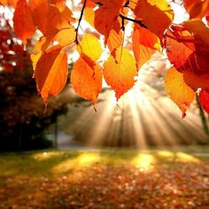 Do you love nature? ok we help you. come and see our site of nature.we've wide range collection of pictures in nature.Many beautiful natures are here. Autumn Day, Autumn Leaves, Autumn Morning, Autumn Forest, Fall Trees, Warm Autumn, Morning Light, Autumn Walks, Morning Dew