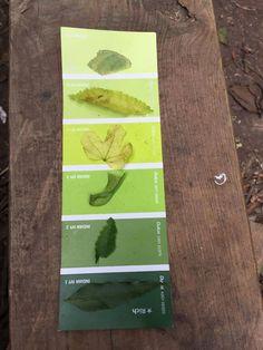 Montessori color tablet spinoff via nature Forest School Activities, Nature Activities, Outdoor Activities, Nature Based Preschool, Outdoor Education, Outdoor Learning, Early Education, Outdoor Classroom, Outdoor School