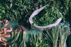 Bangkok Vegetable Market by Rowena Naylor - Stocksy United Lemongrass Oil, Lemon Grass, Bangkok, The Unit, Stock Photos, Vegetables, Outdoor Decor, Nature, Photography