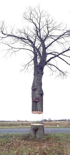 Awesome Spray Painted Illusion of a Hovering Tree Cut in Half