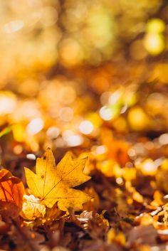 Autumn Leaves Background, Leaf Background, Yellow Aesthetic Pastel, Autumn Witch, Green Scenery, Autumn Scenes, Dry Leaf, Fall Wallpaper, Witch Aesthetic