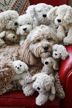 5 Most adorable pets piles you have ever seen