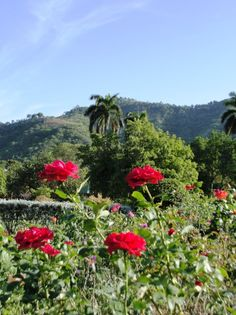 Hope Gardens & Zoo, Kingston Jamaica