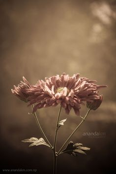 Photography by Ananda K. Maharjan #design #inspiration #photography