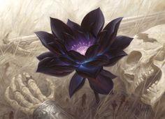 Black Lotusartwork byChris Rahn .