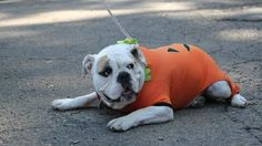 See & Be Seen shows you some of Pittsburgh's cutest pets dressed in Halloween costumes for Animal Friends' Howl-O-Ween parade at Schenley Park.