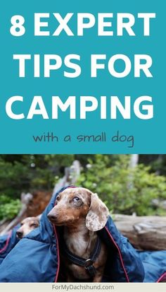 Camping with your small dog? Check out these tips from an expert that has been taking her small dogs on camping adventures for over 15 years. Cold Weather Camping, Flying Dog, Dog Friendly Hotels, Best Campgrounds, Pet Travel, Travel Tips, Dog Carrier, Large Animals, Find Pets