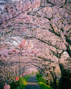 太田川桜堤の桜の写真です。昨年の花見特集でみんなが投稿してくれた桜の写真の中から100枚を厳選して大紹介!どこで花見をするか迷い中の人は、写真を参考に選んでみては?