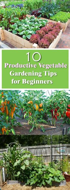 10 Productive Vegetable Gardening Tips for Beginners http://livedan330.com/2015/11/04/10-productive-vegetable-gardening-tips-beginners/