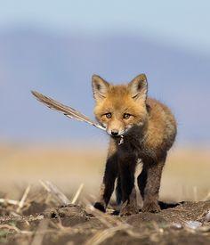 90335626140 38 Best fox jumps cat jumps images