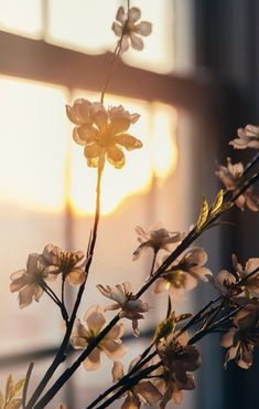 The golden hour on cherry blossoms. What could be more beautiful? ~ETS The golden hour on cherry blossoms. What could be more beautiful? Foto Nature, Beautiful Flowers, Beautiful Pictures, Flowers Nature, Beautiful Things, Morning Light, Morning Sun, Light And Shadow, Aesthetic Wallpapers
